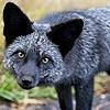Vulpex-Silverfox's avatar