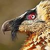 VultureOfVitality's avatar