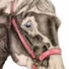 walktrotcanter7's avatar