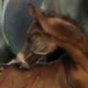 WalkTrotDream's avatar