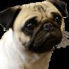 WallyMatchstick's avatar