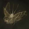 Warywind's avatar