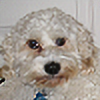 Waterbenderbunny's avatar