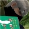 wawayaya's avatar