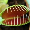 webkinzspongebob's avatar