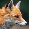 Websurger's avatar