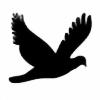 weerachot's avatar