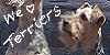 WeLoveTerriers's avatar