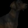 WeltraumKennel's avatar