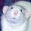 wemberz's avatar