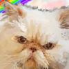 wendybird96's avatar