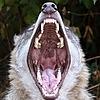 WerewolfCZ's avatar
