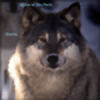 werewolfstorm's avatar