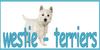 westie-terriers