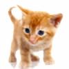 wfrank00's avatar