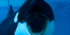 WhalesandDolphinclub's avatar