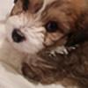 whispering-dragon96's avatar