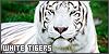 White-Tiger-Love's avatar
