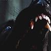 whitebaltowolf's avatar