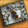 whitedragondesigns's avatar