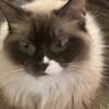 whitefeathursrain's avatar