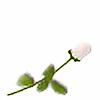 whiteroseplz's avatar