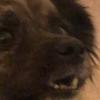 whycause's avatar