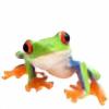 wialbesa's avatar