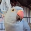 Wigeons's avatar