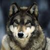 Wilczur1995pl's avatar