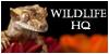 WildlifeHQ's avatar