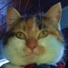 WildWanderinGirl's avatar