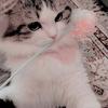 Wilka20017's avatar
