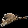 winnidoe's avatar