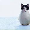 winterhasnoend's avatar