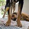 wisewonder's avatar