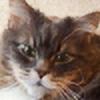 wmholt's avatar