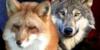 Wolf-Fox-Art