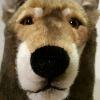 wolfblack666's avatar