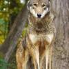Wolfboy-who-cuddles's avatar