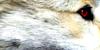 WolfCenter's avatar