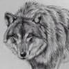 Wolfhake's avatar