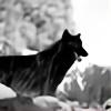 Wolflover95's avatar
