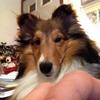 wolfmansax's avatar