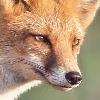WolfScribe's avatar