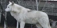 WolfSoulTeam's avatar