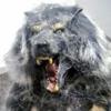 WolfTF918's avatar