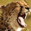 WolfyThePedobear's avatar