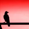 Wolfythewarriordragn's avatar
