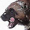 wolverine103197's avatar